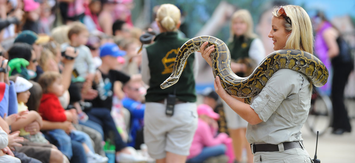 Keeper handling a snake for the crowd